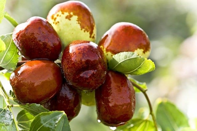 Favorite Foods, dates. What to eat